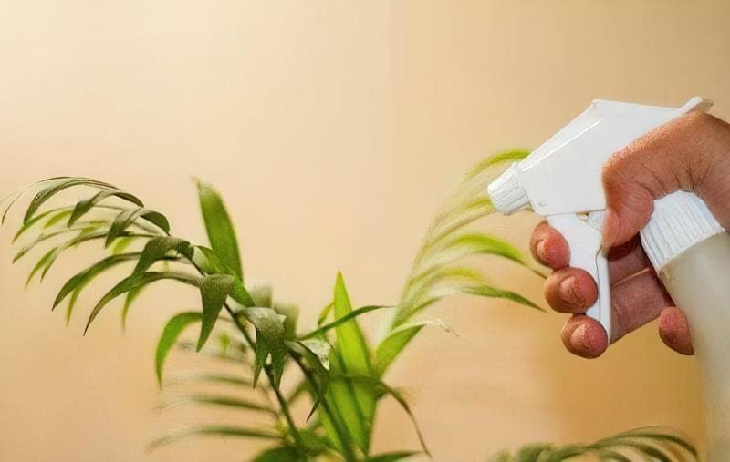 Як і навіщо дотримуватися гігієни кімнатних рослин 2