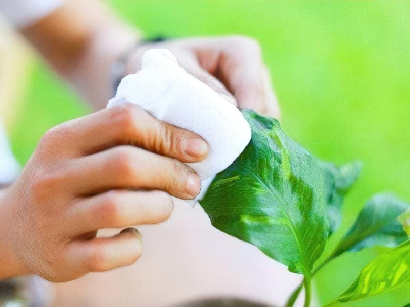 Як і навіщо дотримуватися гігієни кімнатних рослин 1