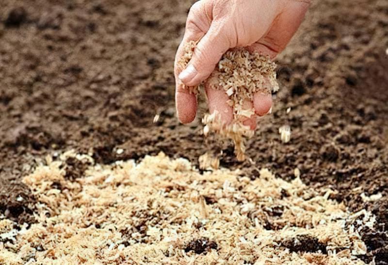 В якості органічних добрив можна використовувати тирсу