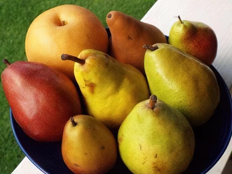 Найкращі сорти груші для саду та дачі 5