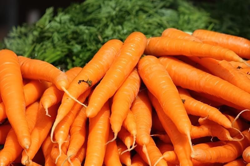 Стійкі до морквяної мухи сорти моркви 1
