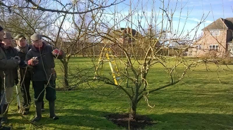 Весняний догляд за яблунями за правилами 1