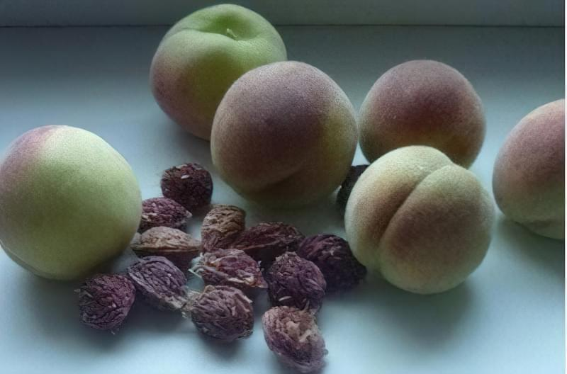 Персикові кісточки рекомендують висаджувати в осінній період