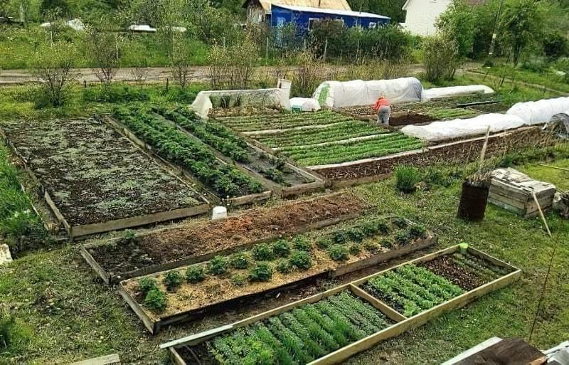 Коли висаджувати помідори, огірки та перець у відкритий грунт: терміни та умови 6