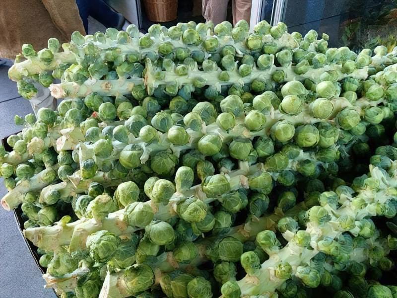 Особливості вирощування брюссельської капусти 1