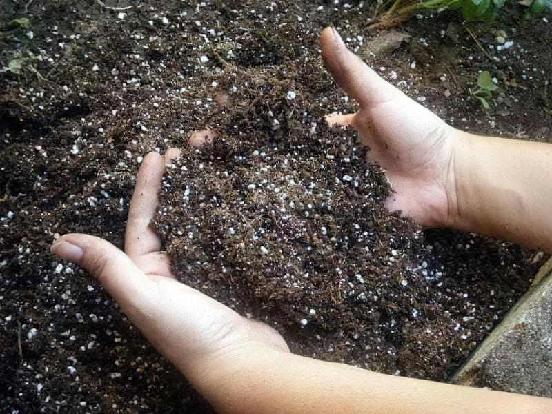 Внесення мінеральних добрив в грунт