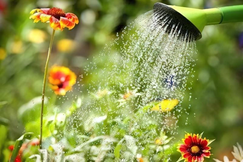 Правила поливу декоративних рослин 1