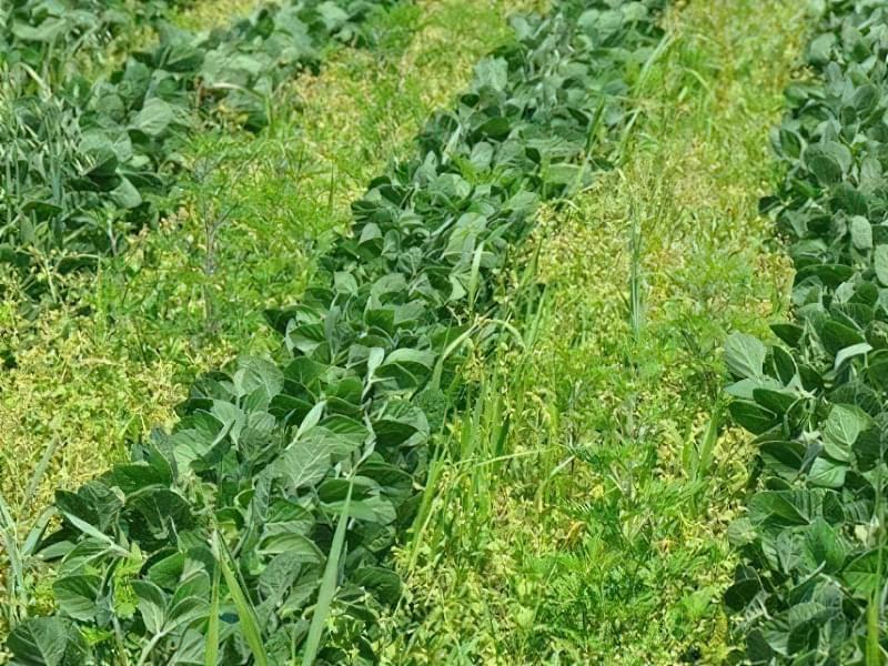 Бур'яни: які з них корисні для городу, а які потрібно видаляти? 2