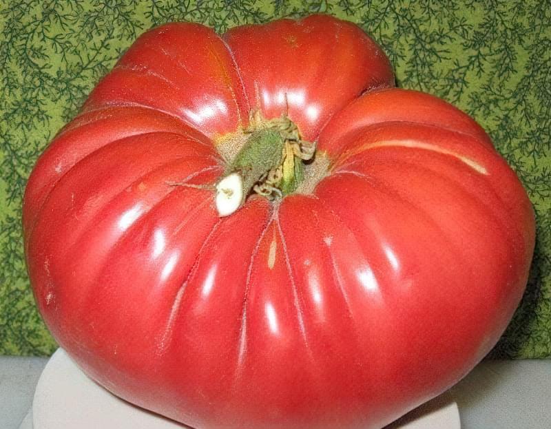 Плоди сорту виростають до 300-700