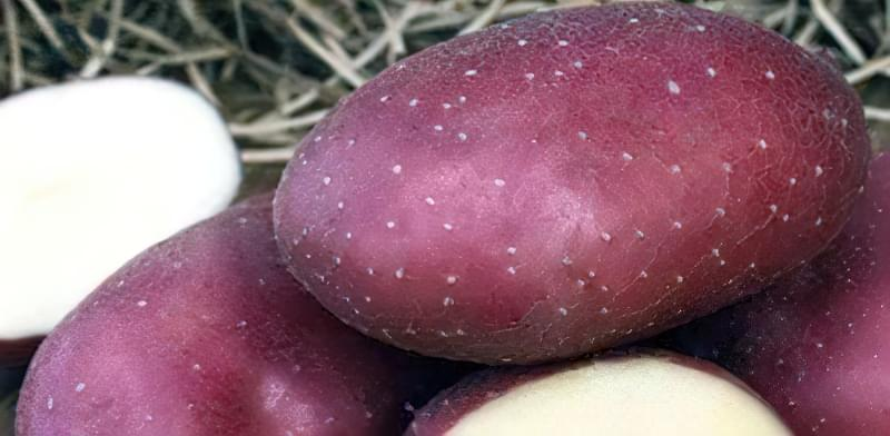 Самі розсипчасті сорти картоплі для пюре. Краща картопля для смаження і салатів 10