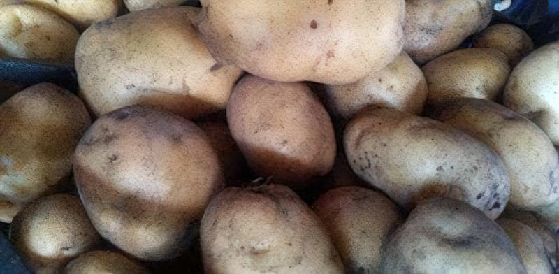 Самі розсипчасті сорти картоплі для пюре. Краща картопля для смаження і салатів 2