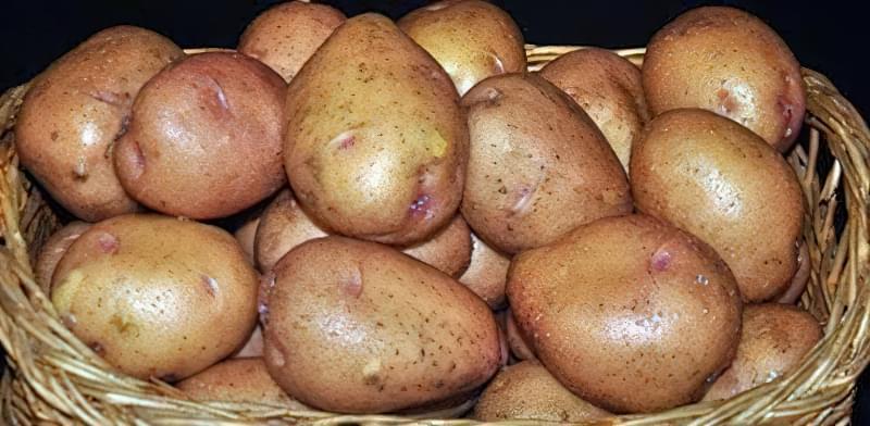 Самі розсипчасті сорти картоплі для пюре. Краща картопля для смаження і салатів 4