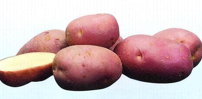 Самі розсипчасті сорти картоплі для пюре. Краща картопля для смаження і салатів 7
