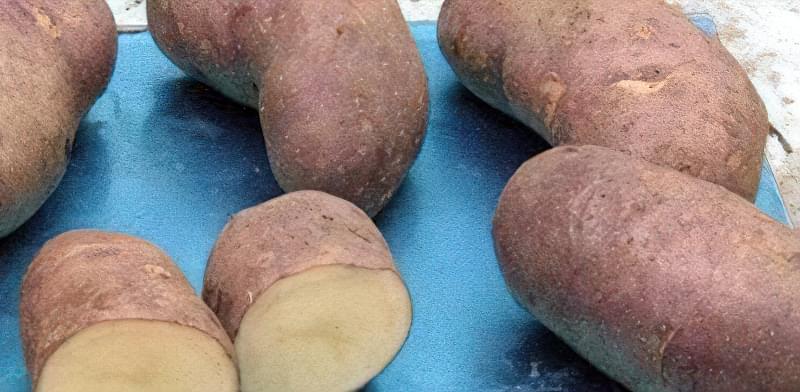Самі розсипчасті сорти картоплі для пюре. Краща картопля для смаження і салатів 1