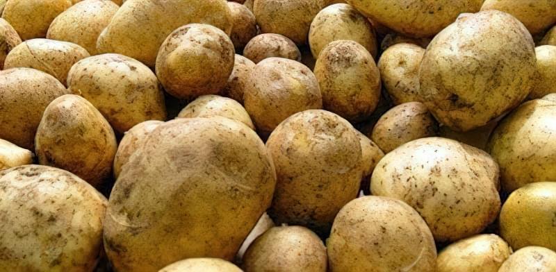 Найсмачніші сорти картоплі: опис, фото 2