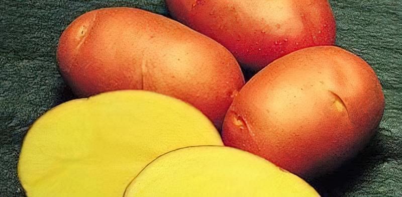 Найсмачніші сорти картоплі: опис, фото 12