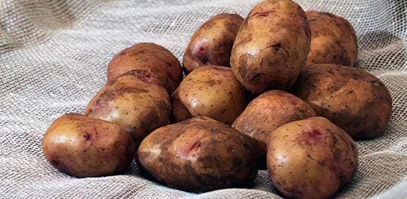 Найсмачніші сорти картоплі: опис, фото 4