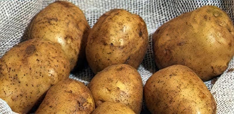 Найсмачніші сорти картоплі: опис, фото 6