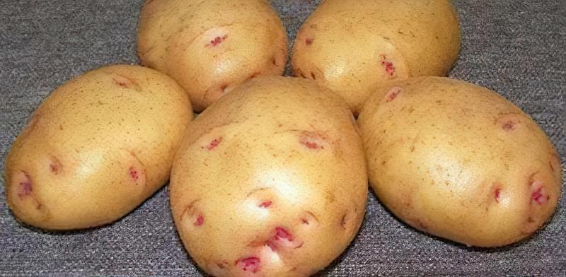 Найсмачніші сорти картоплі: опис, фото 9