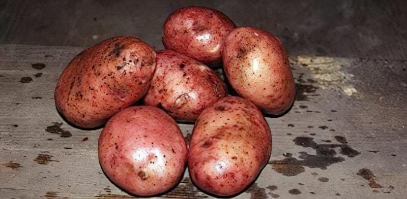 Найсмачніші сорти картоплі: опис, фото 10