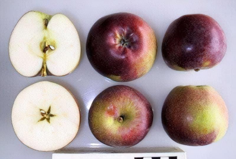 Плоди сорту Спартан важать близько 140-180 г кожен