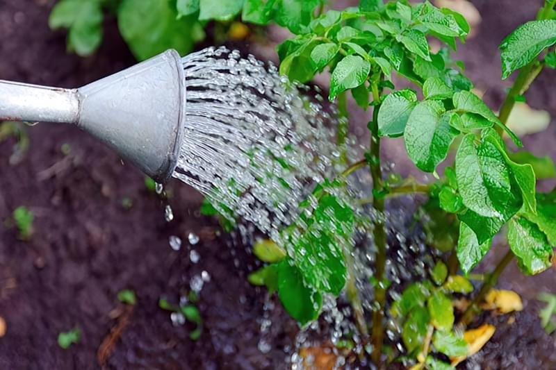 Полив овочів: коли, як і скільки поливати 2