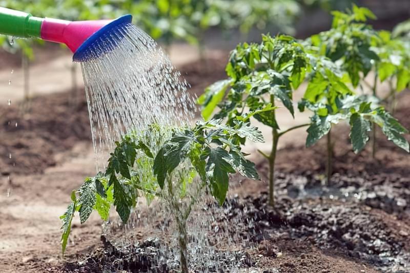 Полив овочів: коли, як і скільки поливати 1