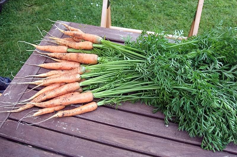 Липень в городі: поради по вирощуванню овочів 1