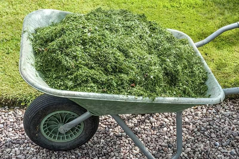 Газонна трава скошена хороший матеріал для мульчування
