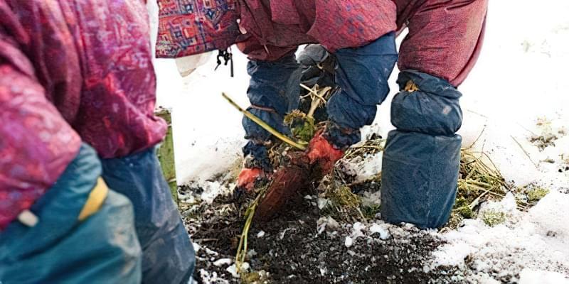 Озимі посіви: коли і як садити 2