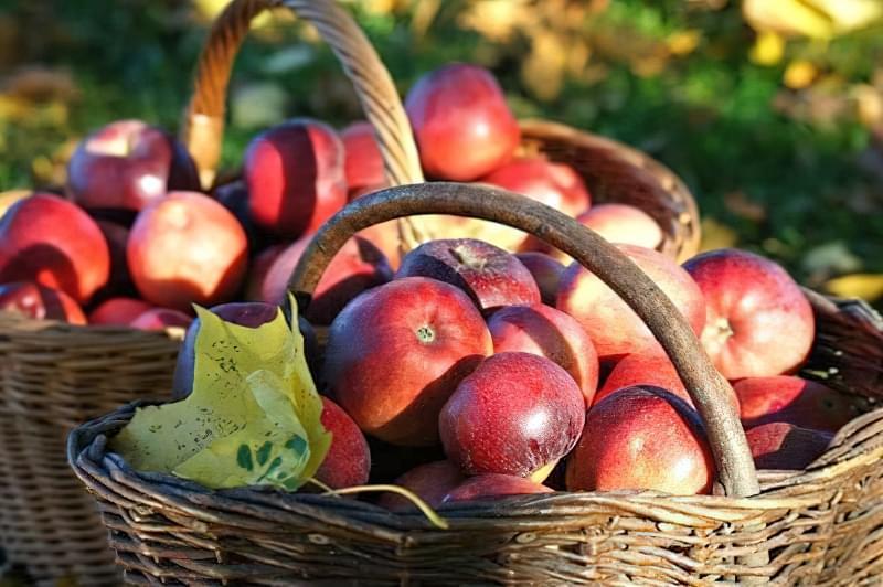 Підгодівля і внесення добрив під яблуні восени 4
