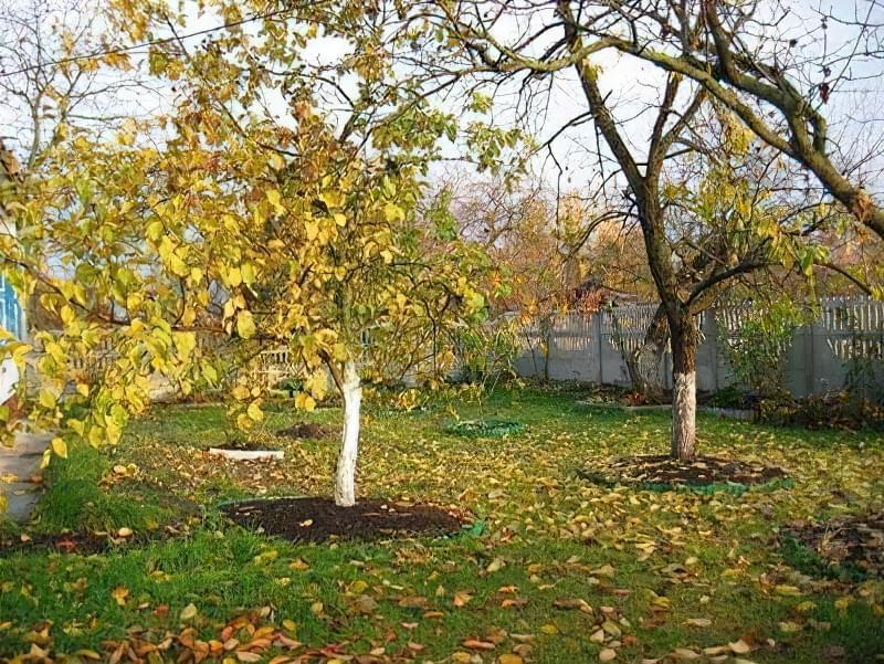 Підгодівля і внесення добрив під яблуні восени 7