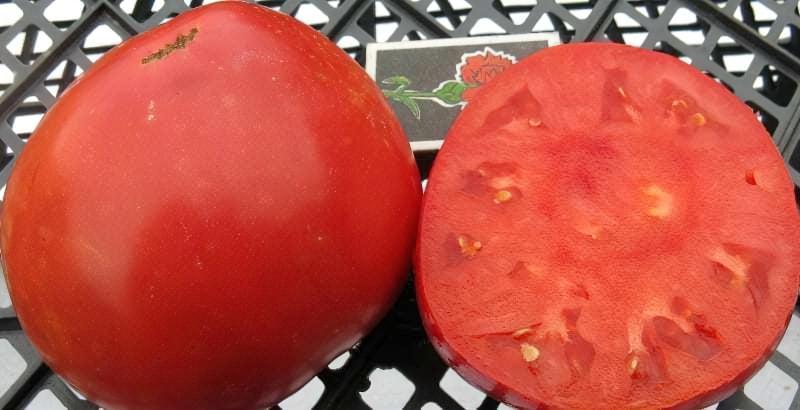 Смачний, солодкий, цукровий помідор – секрети вирощування 1