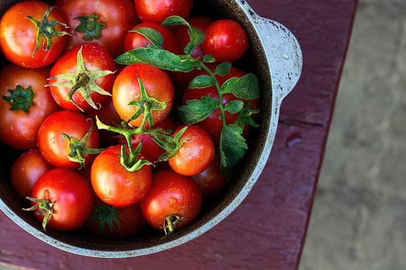 Червоні помідори будучи додані до зелених прискорюють дозрівання