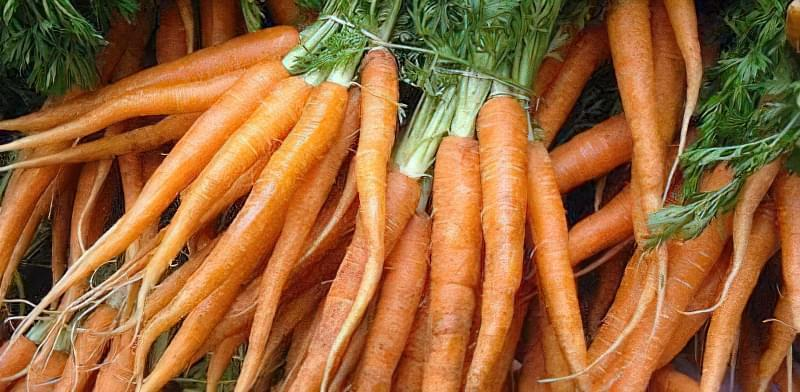 Вирвана рання морква пучкова