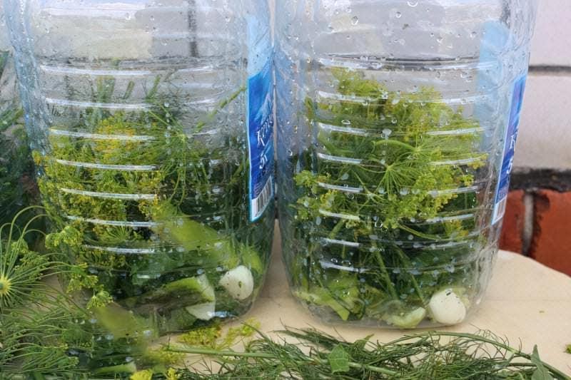 Солоні огірки в пластиковій пляшці на зиму 3