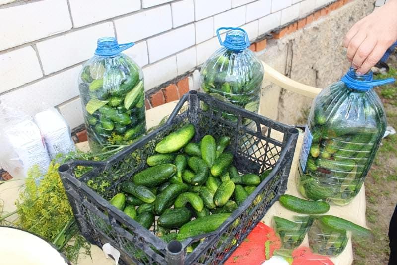 Солоні огірки в пластиковій пляшці на зиму 5