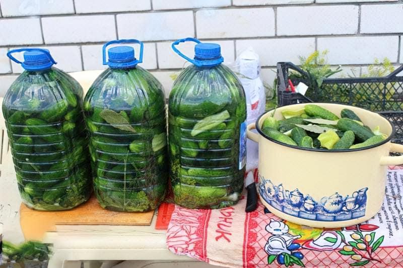 Солоні огірки в пластиковій пляшці на зиму 1