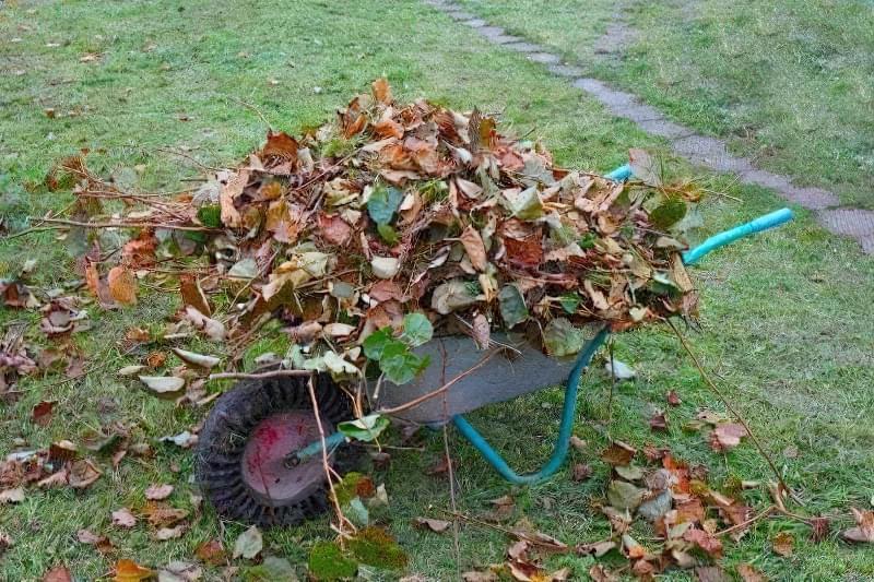 Вкрити часник можна звичайним опалим листям