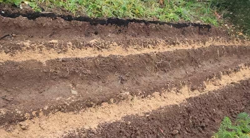 Що можна садити під зиму на городі? 2