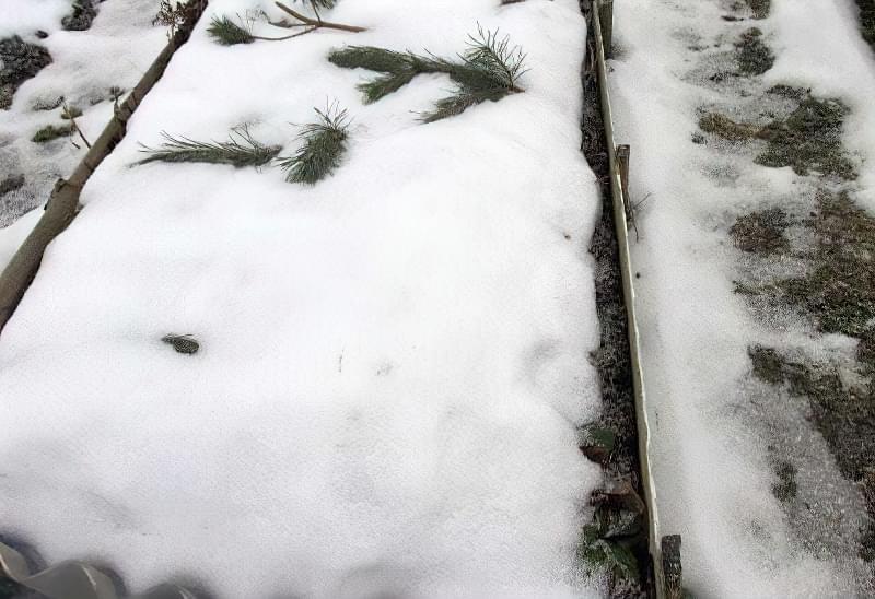 Що можна садити під зиму на городі? 4