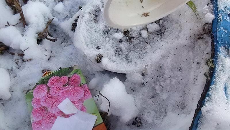 Що можна садити під зиму на городі? 7