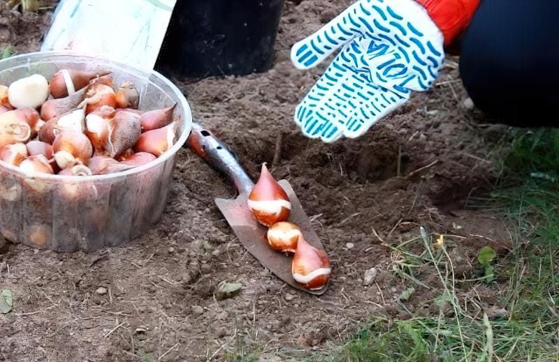 Що можна садити під зиму на городі? 8