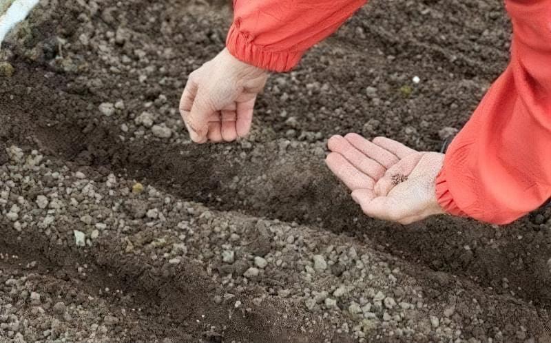 Що можна садити під зиму на городі? 1