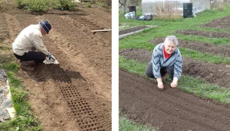 Посадка моркви під зиму – коли і як садити? 2