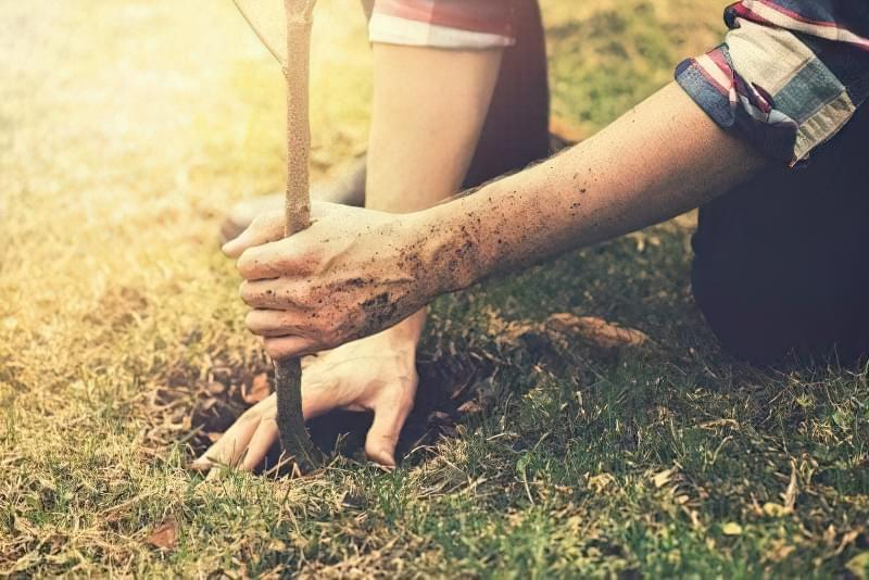 Що потрібно знати для успішної посадки саджанців восени? 5