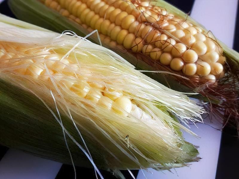 Порівняння зовнішнього вигляду кормової та харчової кукурудзи