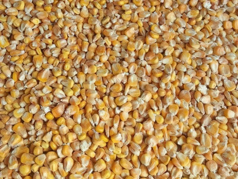 Промислова заготівля кукурудзяних зерен