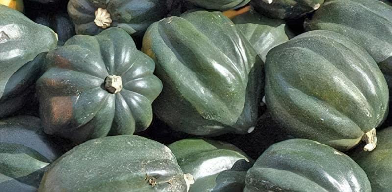 Зелений гарбуз: цікаві сорти з фото, описом 7