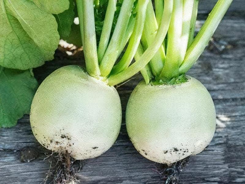 У коренеплоді міститься багато корисних речовин